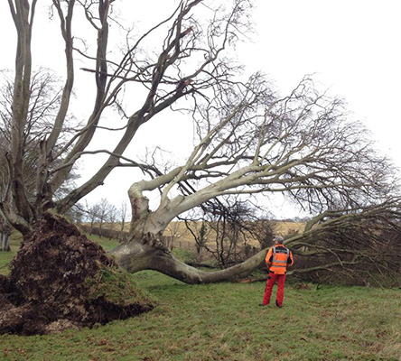 tree-surgon-emergency-hampshire