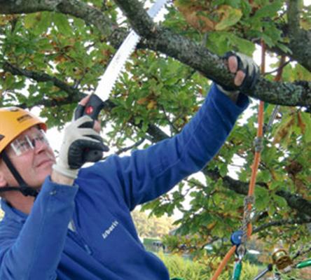 tree-surgon-newforest-hampshire