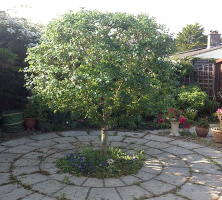 tree-planting-hampshire