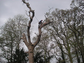 tree-surgeon-climbing-2