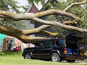 tree-surgeon-damage
