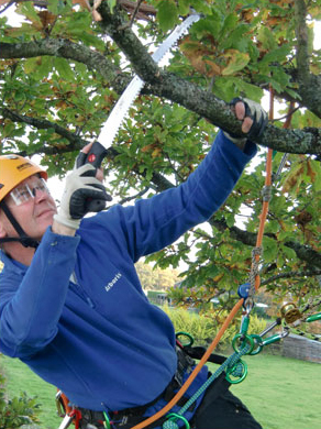 tree-surgeon-pruning
